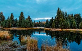 Picture frost, autumn, forest, grass, trees, lake, Wyoming, USA, cloudy