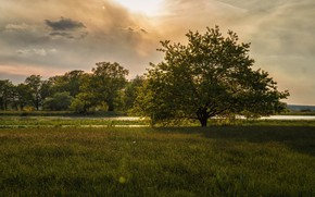 Picture river, tree, meadow