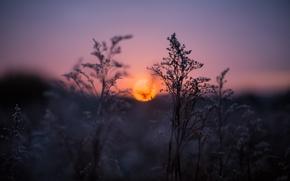 Wallpaper grass, sunset, twilight
