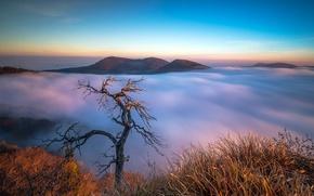 Picture mountains, tree, obloka