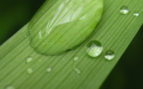 Picture rain, leaf macro photo, a drop of water