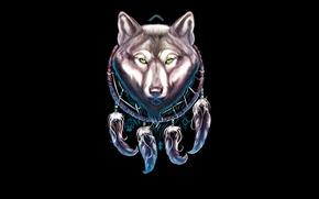 Picture the dark background, wolf, wolf, Dreamcatcher, dreamcatcher, dream catcher