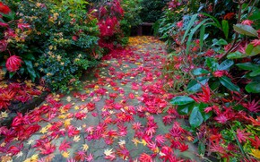 Picture autumn, leaves, England, garden, shop, track, the bushes, Walsall Garden