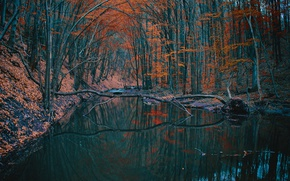 Picture autumn, forest, trees, lake, pond