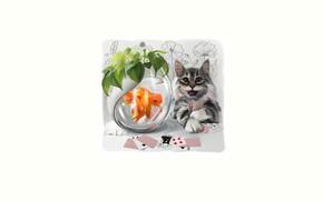 Picture card, cat, look, aquarium, fish