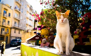 Picture summer, cat, the city