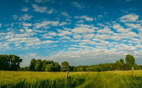 Picture greens, field, the sky, clouds, trees