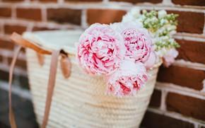 Picture flowers, petals, pink, bag, peonies