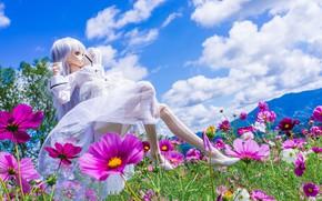 Picture flowers, Doll, kosmeya