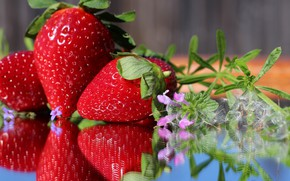 Picture flowers, strawberry, ripe, delicious, juicy