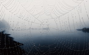 Picture drops, nature, web