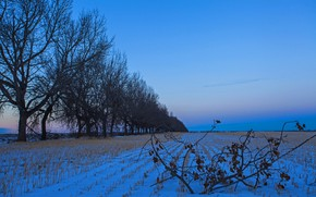 Picture field, snow, trees, branch, morning