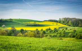 Picture greens, grass, trees, field, meadows
