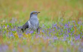 Picture grass, flowers, bird, feathers, beak