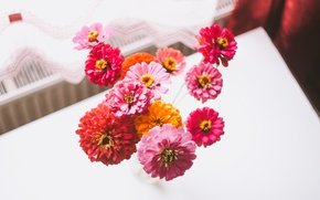 Picture flowers, bouquet, petals, tsiniya