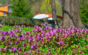 Picture Spring, Park, Park, Spring, Flowering, Garden, Flowering