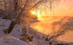 Picture winter, the sun, snow, trees, nature, dawn, river