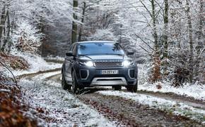 Picture winter, snow, lights, Range Rover, Evoque, Autobiography, Si4