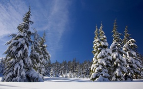 Wallpaper forest, trees, the sun, winter, snow, the sky