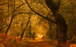 Wallpaper autumn, forest, trees, England, England, Exmoor, Exmoor, Horner Woods