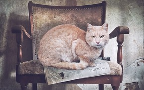 Picture cat, chair, newspaper