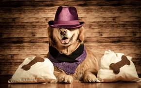 Picture hat, pillow, Retriever