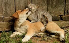 Picture cat, cat, dog, friendship, friends