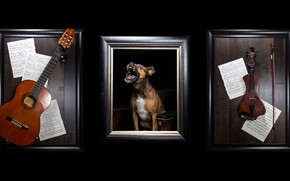 Picture notes, music, violin, guitar, dog