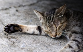 Picture cat, sleeping, foot