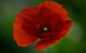 Picture macro, Mac, petals