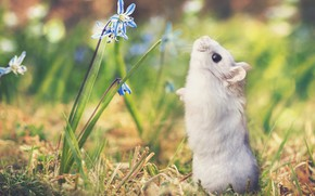 Picture grass, flowers, nature, hamster, bokeh, by Thunderi