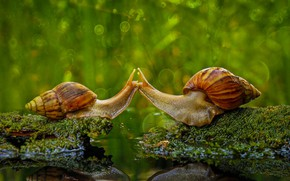 Picture nature, snail, kiss, sink, Indonesia, Sambas Regency