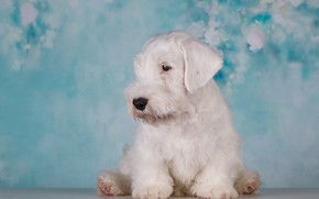 Picture white, background, Dog, puppy, Baby