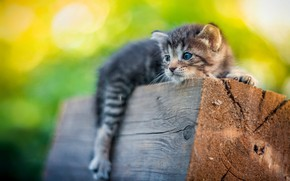 Picture kitty, small, log