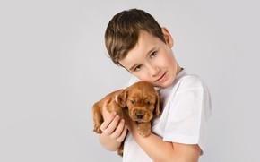 Picture child, boy, puppy, friends