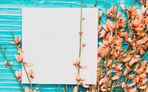 Picture flowers, decor, paper, plants, decorative