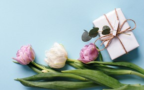 Picture flowers, flowers, spring, gift, tender, tulips, gift, white, pink, tulips, fresh, beautiful
