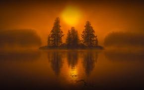 Picture trees, fog, lake, mystic, island