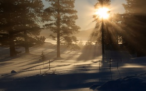 Picture winter, forest, light, morning