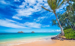 Picture palm trees, the ocean, coast, Hawaii, Pacific Ocean, Hawaii, The Pacific ocean, Lanikai Beach, Oahu, ...