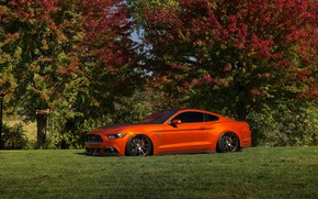Picture Mustang, Ford, Orange, Wheels, Niche