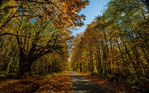 Picture autumn, forest, leaves, the sun, trees, Park, yellow, track, alley