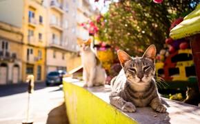 Picture summer, heat, street, cat