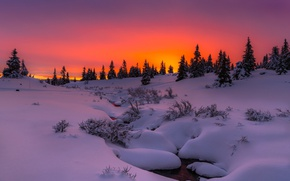 Wallpaper winter, snow, trees, sunset, nature, the evening