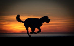 Picture sunset, dog, silhouette