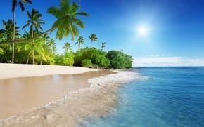 Picture beach, tropics, palm trees, coast