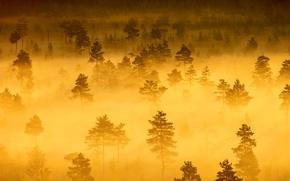 Wallpaper forest, haze, trees, fog