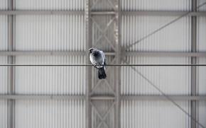 Picture the city, bird, dove