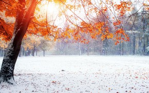 Picture winter, snow, Park, yellow leaves