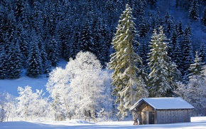 Picture winter, forest, snow, trees, Germany, Bayern, the barn, Germany, Bavaria